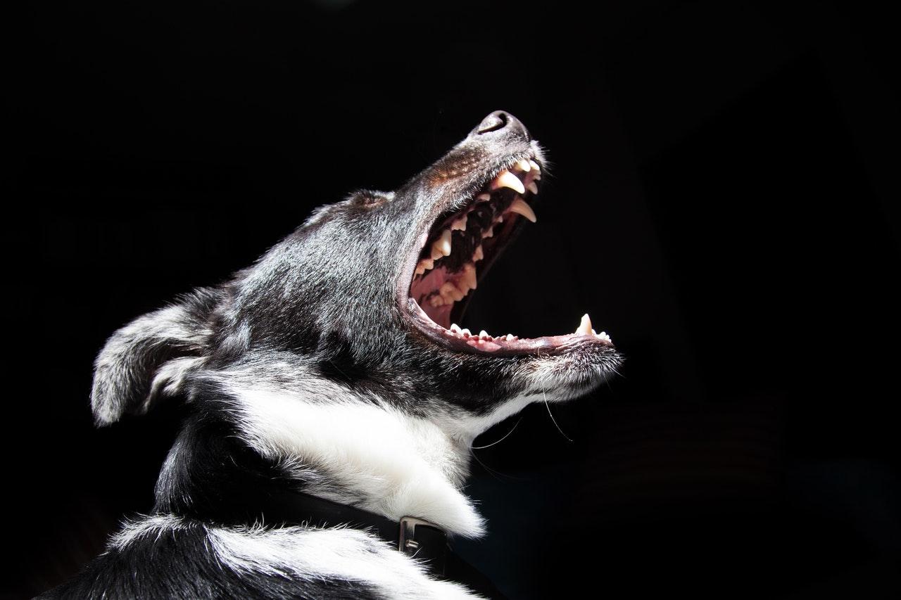 Hvad må hunde ikke spise