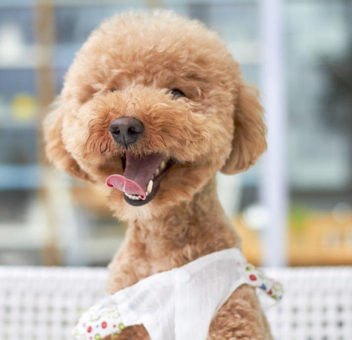 Hundehvalp opdragelse