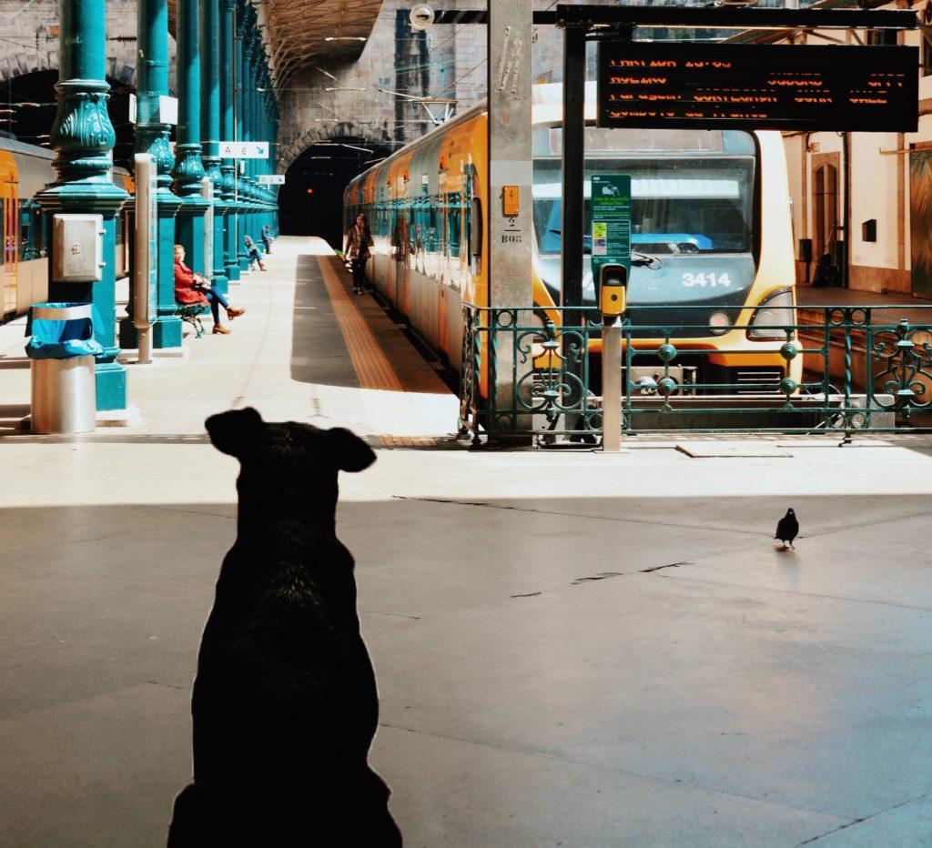 hund venter på tog