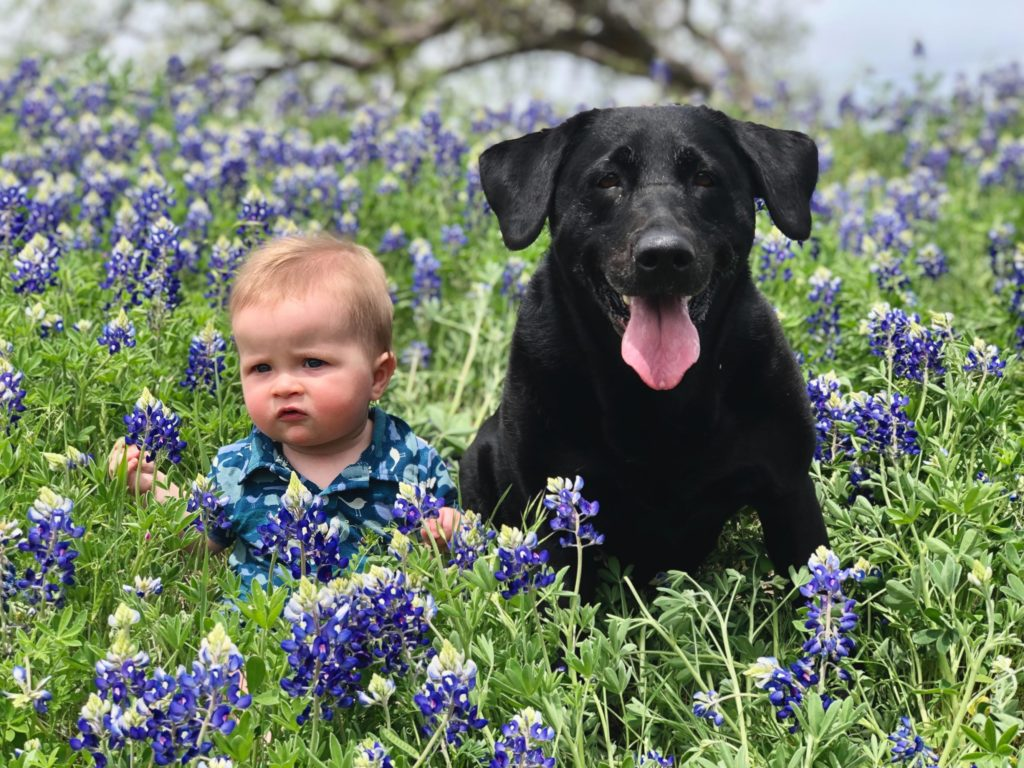 hund og baby på blomstermark