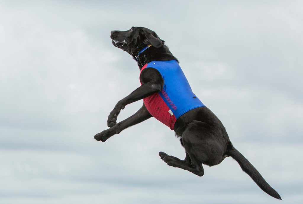 hund der hopper i luften