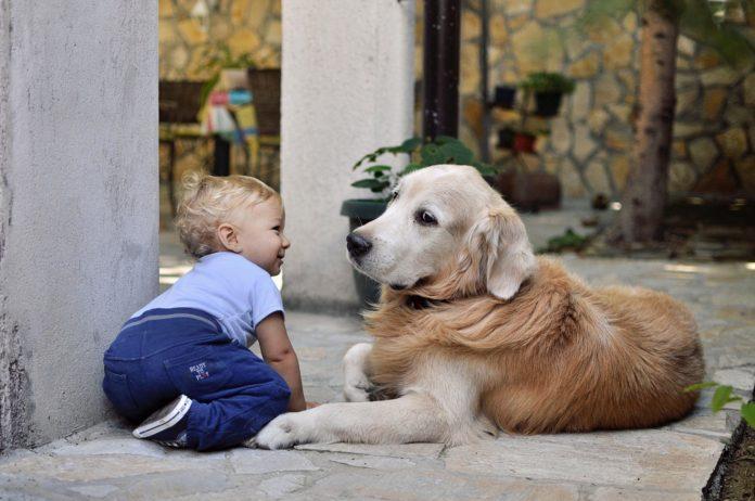 hund og baby leger