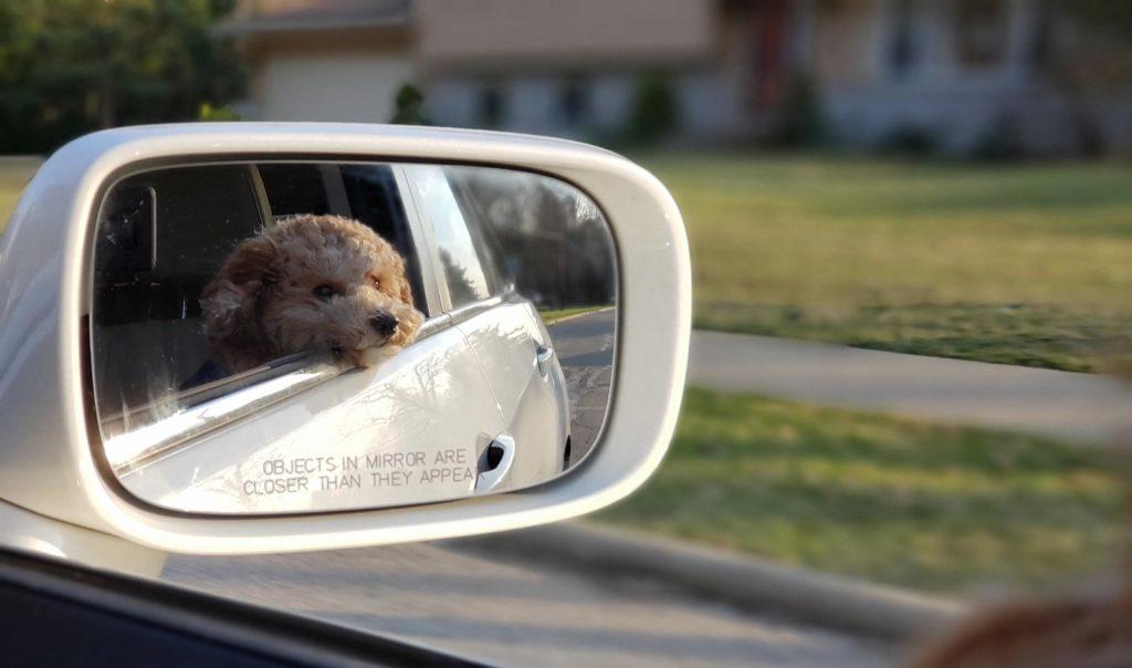 hund i bil sidespejl