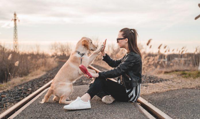 hund giver high five til kvinde
