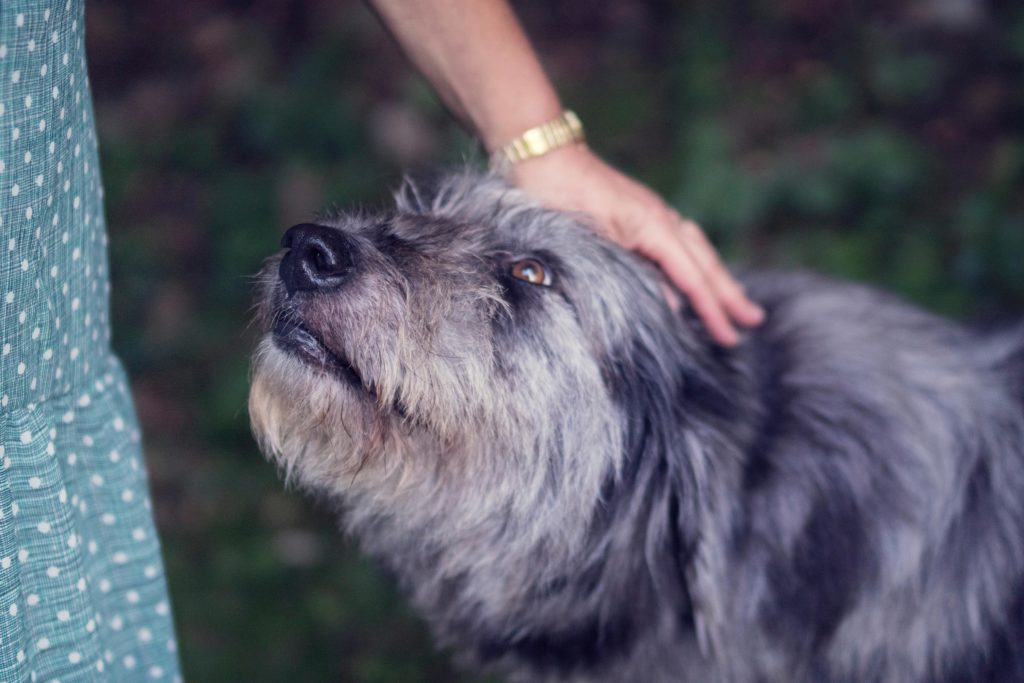 hund der bliver klappet på hovedet