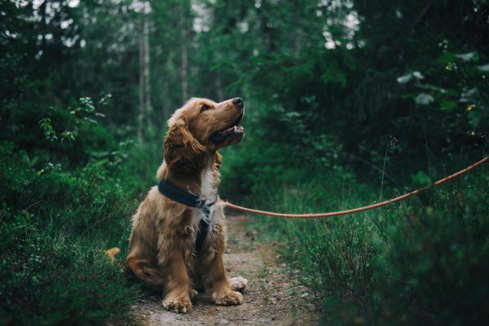 hund i skoven
