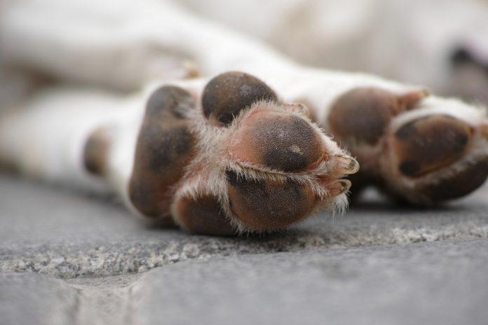 hundepoter