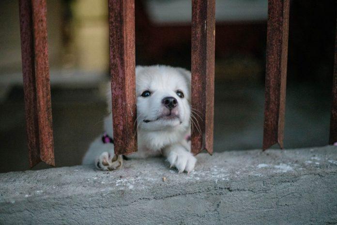 hund har lopper