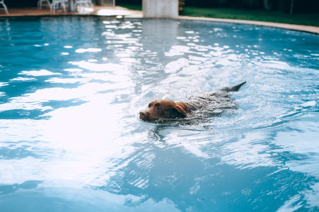 Hunde i bad